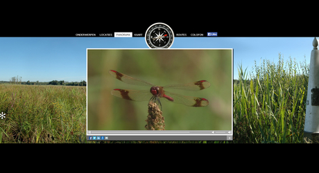Dwaalfilm Smeetshof libellen