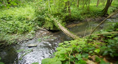 Verkiezing Mooiste Natuurgebied van Nederland