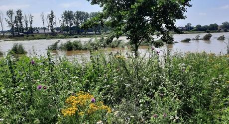De Grensmaas, 1 dag na het zomerhoogwater
