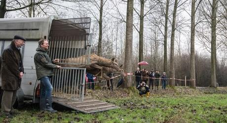 Het edelhert is terug in Brabant. Foto: James van Leuven