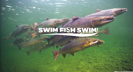 Swim Fish Swim!
