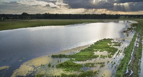 Klimaatbuffer Raamweide, foto: Bob Luijks