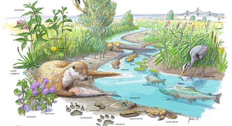 Zoekkaart Leefgebied Otter