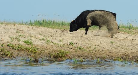 Rund Roemenië Staffan Widstrand / Rewilding Europe