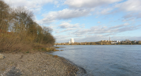 Potentieel paaigebied voor steuren in de Rijn in de omgeving van Keulen