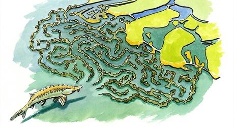 Steuren labyrint cache