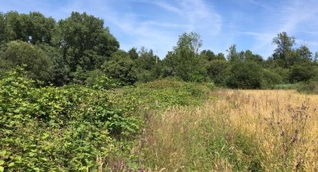 Het Brabantse natuurgebied De Mortelen. Foto: Sjors de Kort, Brabants Landschap