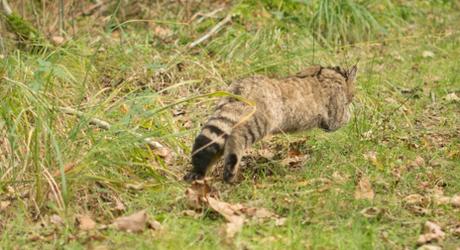 Loslaten Wilde kat Foto Jasja Dekker