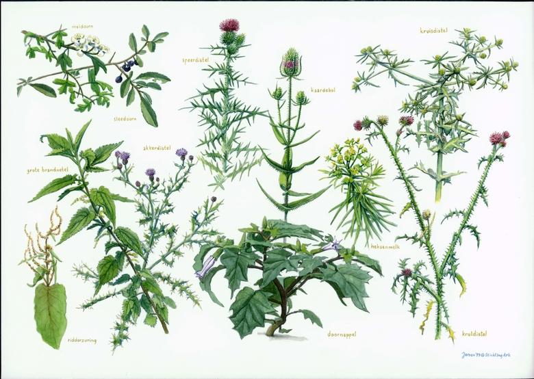Zoekkaart Blijf van me af planten. Planten met stekels, naalden of giftig.
