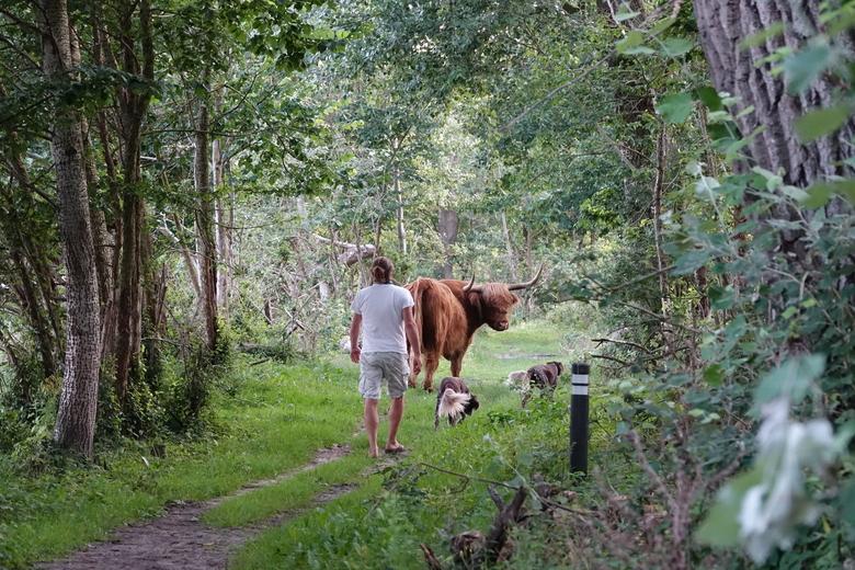 Als grazers op of naast het pad liggen of het pad oversteken, ook dan afstand houden. Houd honden aan de lijn.
