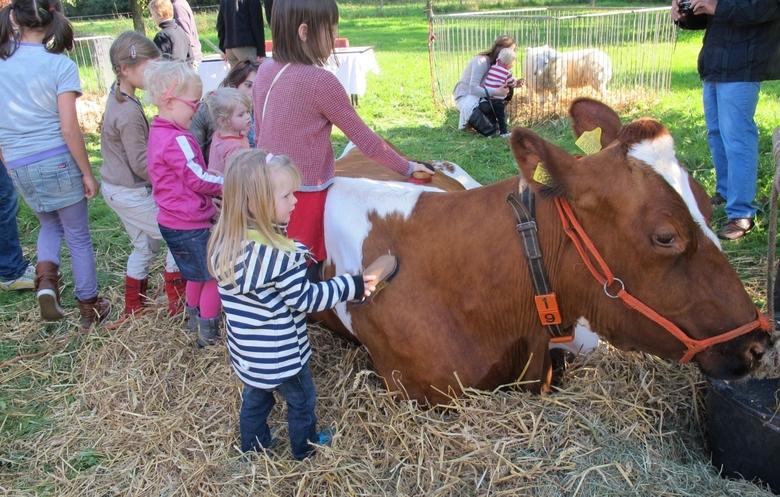 Koe op een kinderboerderij. Foto: Ellen Luijks