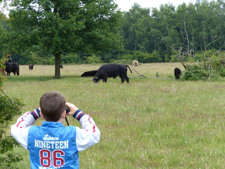 Vertrouwd raken met runderen en paarden als onderdeel van de natuur. Foto: Rob Brinkhof