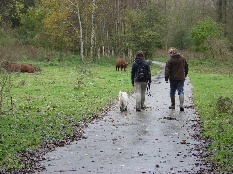Als grazers op of naast het pad liggen of staan of het pad oversteken, ook dan afstand houden. Houd honden aan de lijn