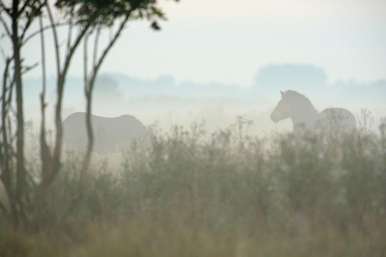 Konikpaarden in Beremytske Biosfera