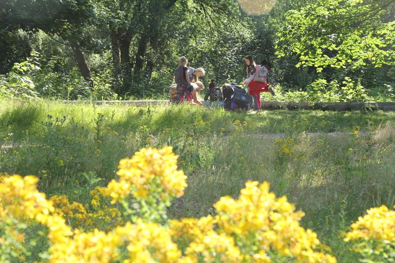 Veldles Eiland van Brienenoord (Foto: Linde de Leeuw)