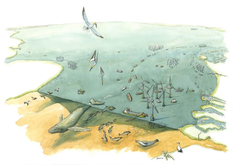 Walvissen spelen ook na hun dood een belangrijke rol in de voedselketen van de Noordzee