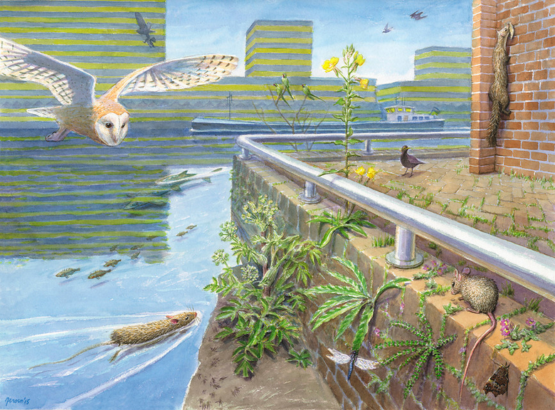 Stadsnatuur, tekening: Jeroen Helmer