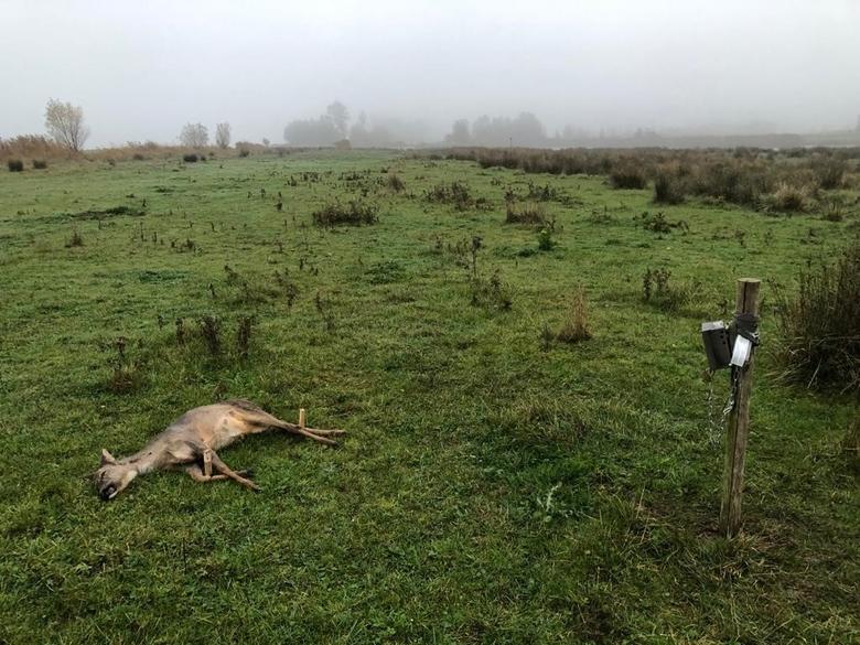 Een wildcamera opstelling in de Biesbosch