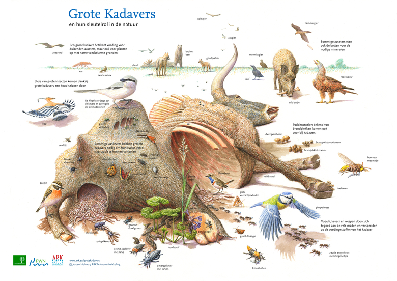 Sleutelrol van grote kadavers in de natuur