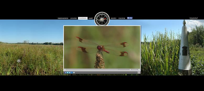 Dwaalfilm, Kempen~Broek, libellen, bandheidelibel