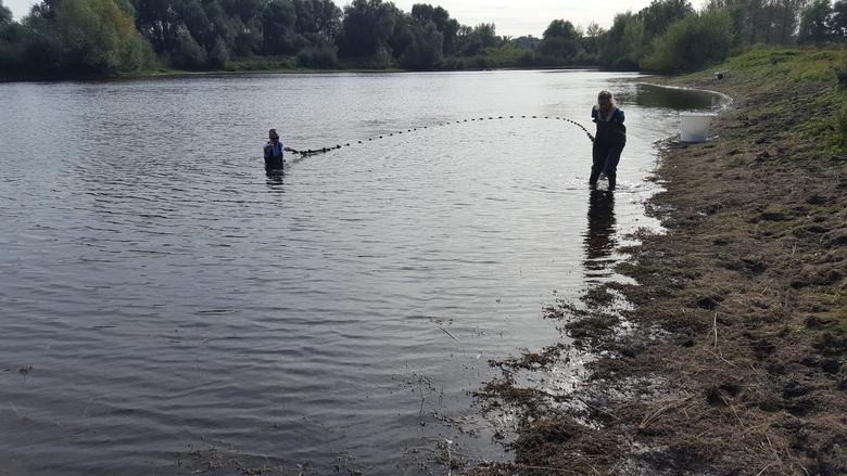Visonderzoek in de Oude Waal