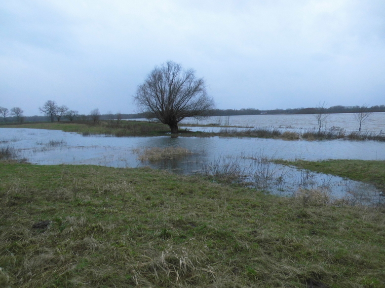 Hoogwater Grensmaas