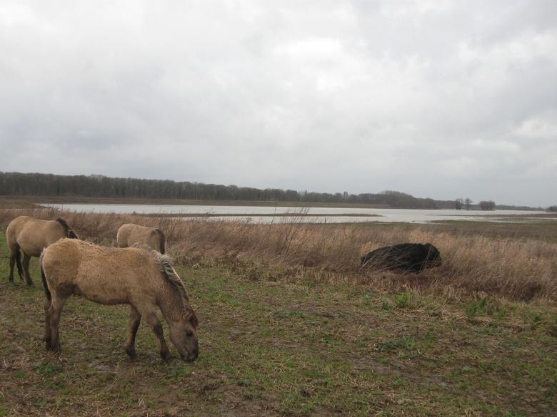 Hoogwater Grensmaas januari 2015