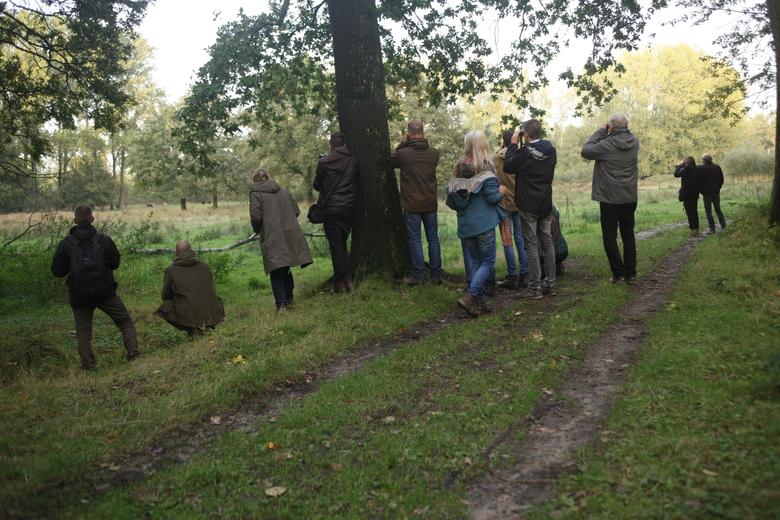 Bronstexcursie naar de edelherten in Het Groene Woud