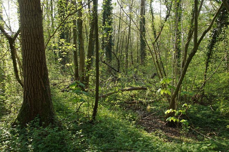 Wijboschbroek in Het Groene Woud. Foto: Bert Vervoort