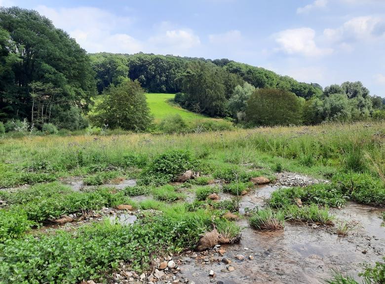 Hellingbossen en natuurlijke graslanden houden regenwater langer vast