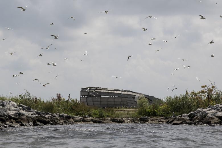 Vogeleiland Bliek in het Haringvliet