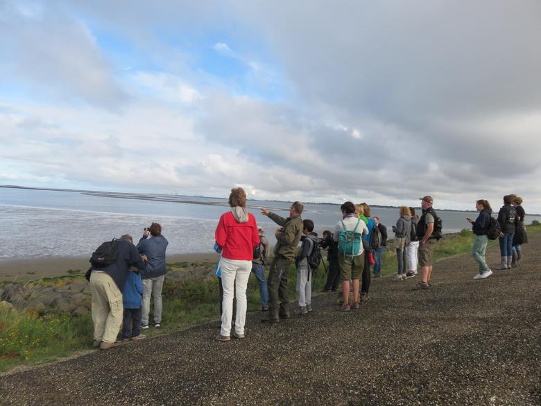 Vogelexcursie langs het Haringvliet