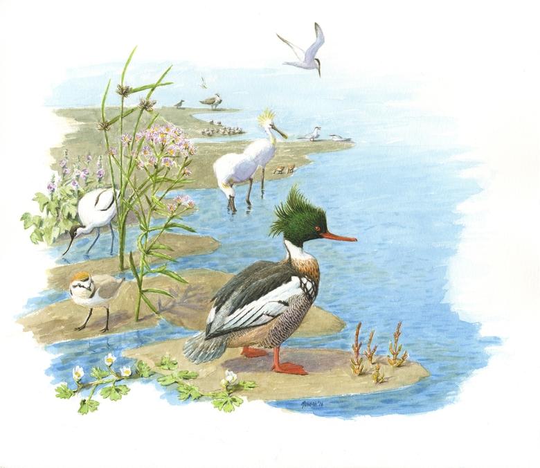 Vogels haringvliet