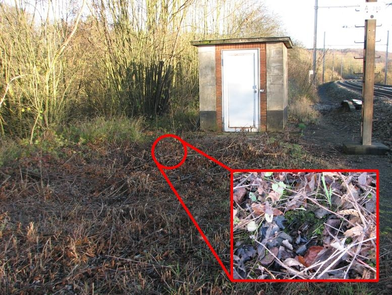 Winternest 2: goed verborgen onder een dun laagje mos, maar wel 3 meter buiten de bosrand, dus onbeschut en onderhevig aan temperatuurschommelingen.