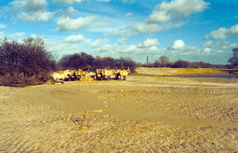 Dikke pakketten zand op het Millingerduin na hoogwater Millingerwaard 1995