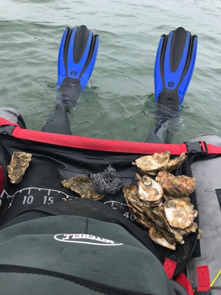 Monitoring groei oesterbroedjes