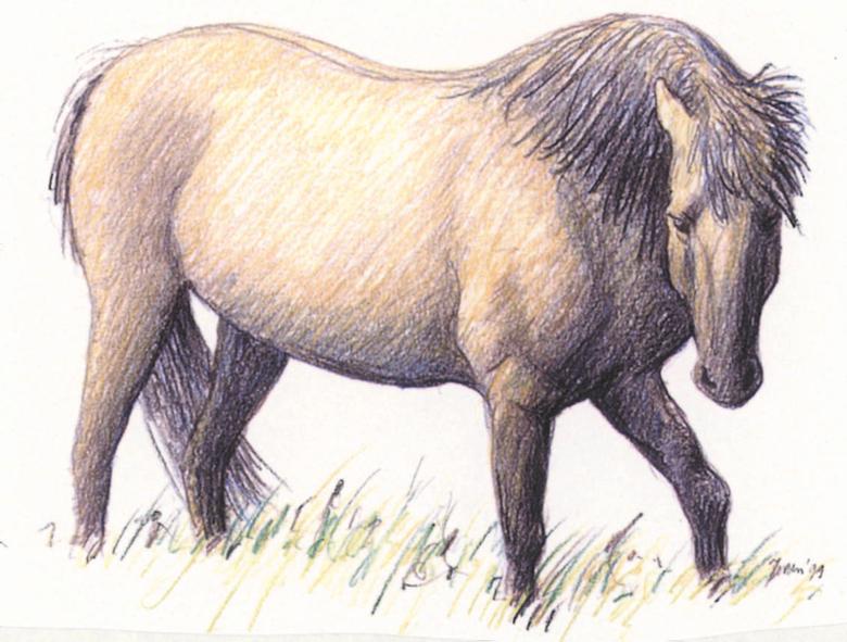 Wild status voor paarden