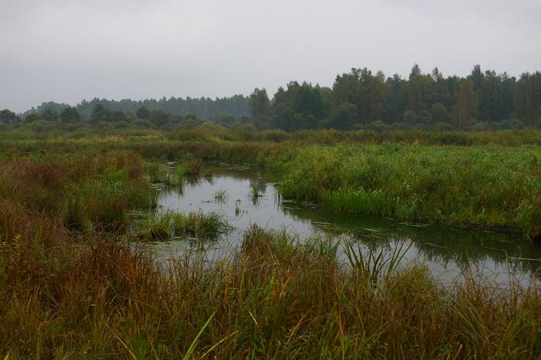 Nieuw moeras langs de Dviete