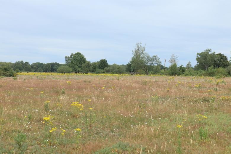 Niet verdroogd bloemrijk grasland in de Maashorst met uitgegroeid en uitgebloeid gras. (Foto: Leo Linnartz)