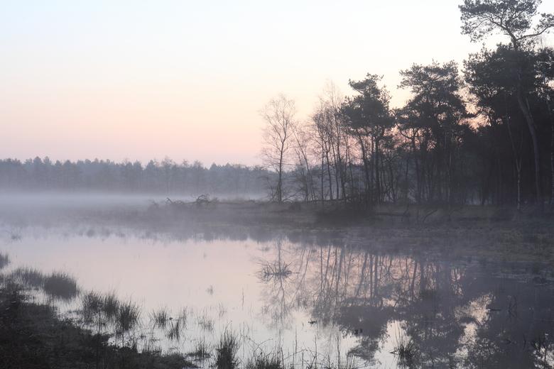 Zo nat was de Maashorst in 2016. Een beeld dat nu volledig verdwenen is door droogte, bovenmatige waterafvoer en beregening. Geen rugstreeppad die zich meer voortplant en in plaats van zonnedauw groeit hier nu een jong berkenbos.