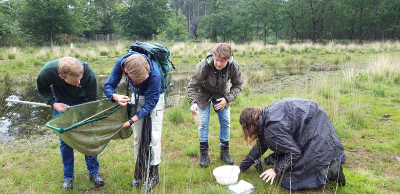Beestjes zoeken in de Maashorst tijdens het 1000-soorten-weekend