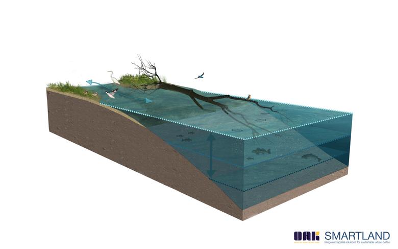 Figuur 1. Voorbeeld van een zachte oever met rivierhout. Bron: OAK en Smartland