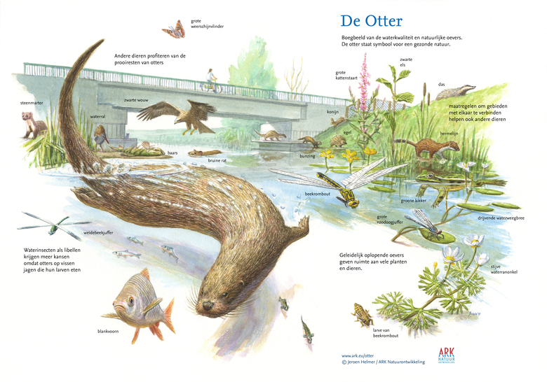 Kom ook in actie en geef de otter een vrije doorgang kado!
