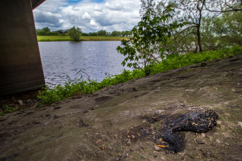 Klassieke otterspraint. Onder een brug, op het meest uitstekende steentje wat er te vinden was. Foto: Michiel van Noppen