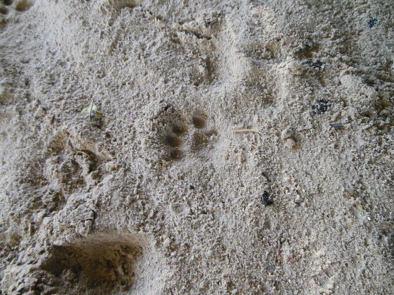 Pootafdruk van een otter