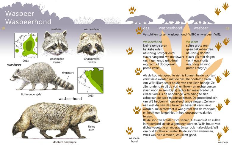 Wasbeerhond en wasbeer in de Roofdierenveldgids