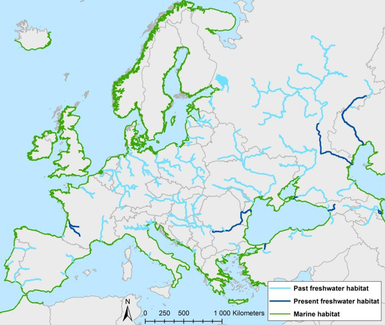 De verspreiding van steuren in Europa. In Frankrijk komt alleen de Europese steur voor. De andere steurensoorten komen voor in de grote rivieren die uitmonden in de Zwarte zee. Bron: Europees Actieplan voor steuren 2018