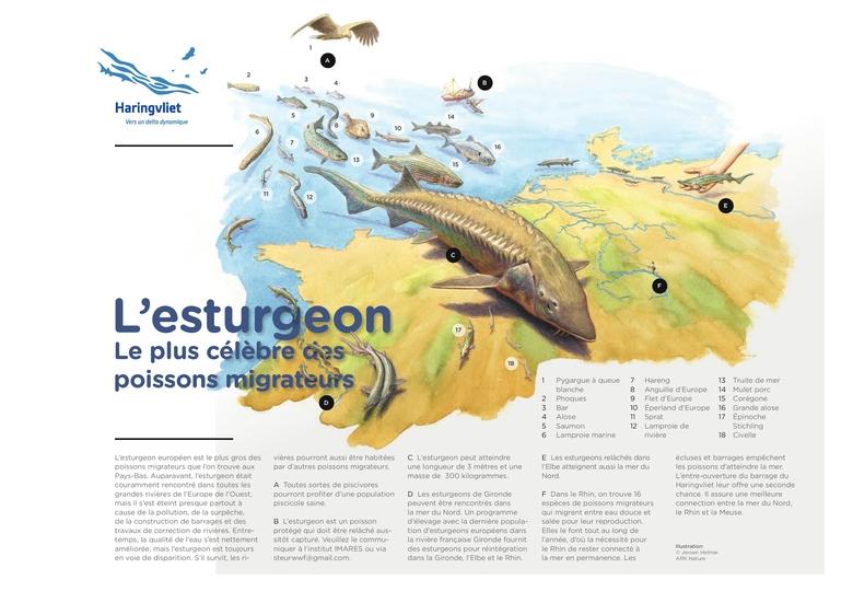 Factsheet Steur Frans