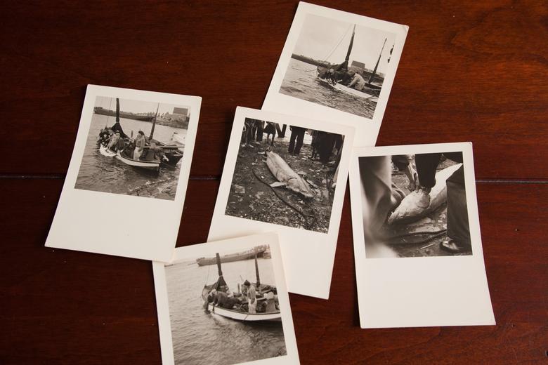 De rest van de foto's van de steurvangst in 1952.