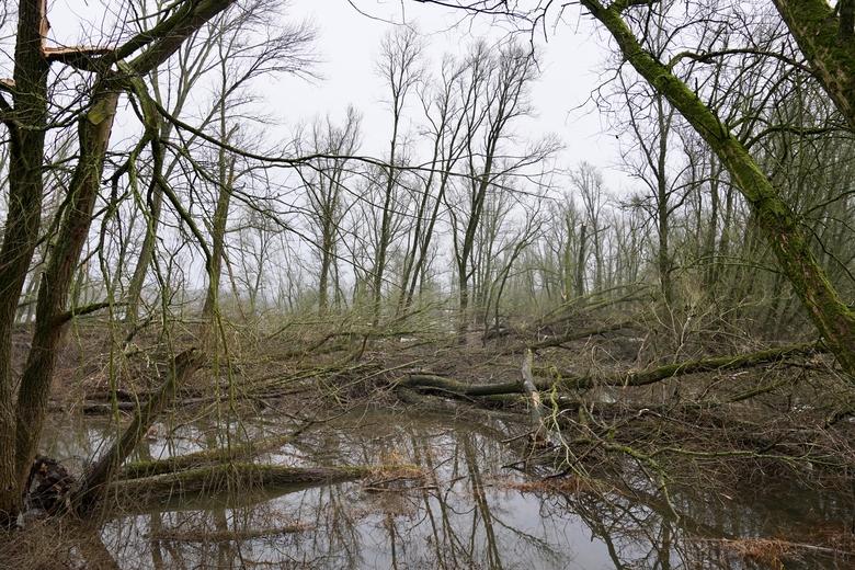 Omgevallen bomen door storm. Foto: Twan Teunissen